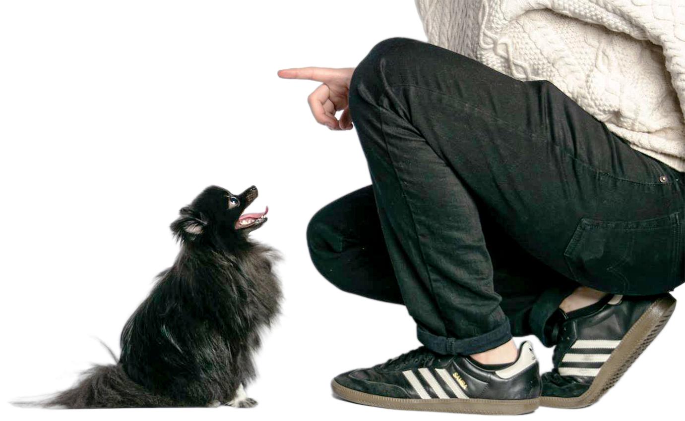Pomeranian dog photo tips