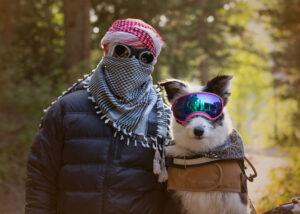 border collie in goggles