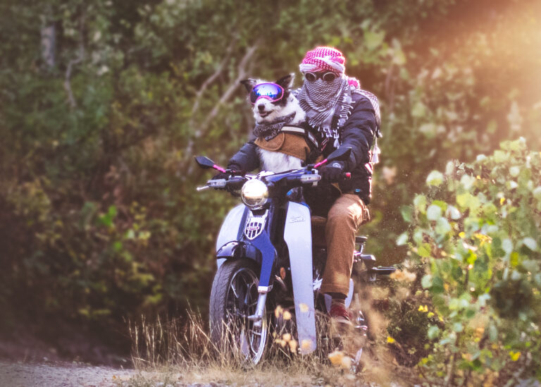 man and dog on scooter motorcylcle